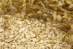 Oats. Background from the ears of oats and oatmeal Stock Photos
