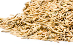 Oats Stock Image