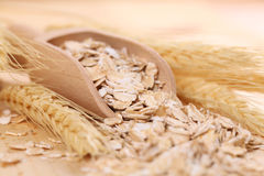 Oats Royalty Free Stock Photo