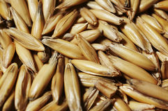 Oats. Background Stock Photography