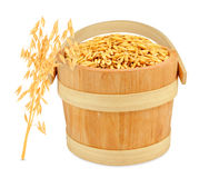 Oats in a bucket Royalty Free Stock Image