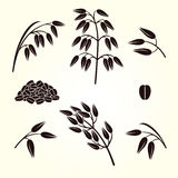Oats collection set. Vector Stock Image