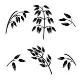 Oats collection set. Vector Stock Photo