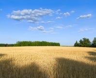 oats för kantjusteringsfältoat Fotografering för Bildbyråer