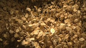 Oats Falling in the Air in Slow Motion a Top Shot 4K