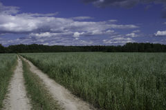 Oats field. With a forest on background Stock Photography