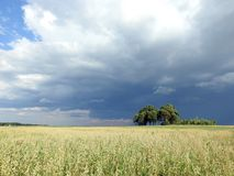 Oats field and beautiful cloudy sky, Lithuania stock photography