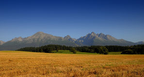 Oats field under mountains Stock Photos