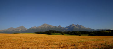 Oats field under mountains Stock Photography