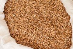 Oats grain detail Royalty Free Stock Images