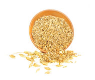 Oats grains and spikes Royalty Free Stock Photography