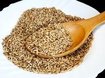 oats kärnar ur Royaltyfri Foto