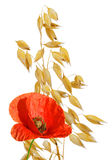 Oats with red poppy Stock Images