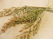 Oats, rice and millet Royalty Free Stock Images