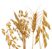 Oats, rye and wheat. Isolated on white Royalty Free Stock Photos