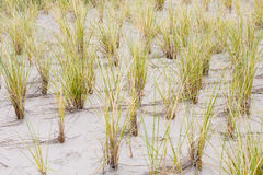 Oats and sand Royalty Free Stock Photos