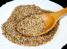 Oats seed Royalty Free Stock Photo