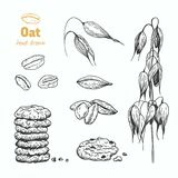Oats vector hand drawn illustration Royalty Free Stock Photo