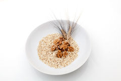 Oats walnuts and grain Royalty Free Stock Images
