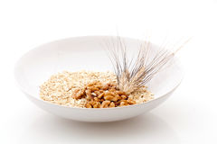 Oats walnuts and grain Stock Photos