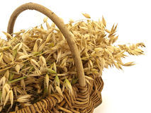 Oats in wicker basket royalty free stock photography