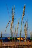 oatshav som förbiser havet Arkivbilder