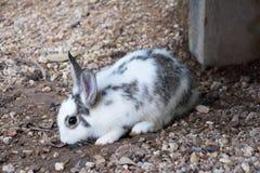 Oavbrutet tjata kaninen i trädgården Arkivfoto