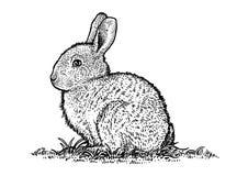Oavbrutet tjata kaninillustrationen, easter, teckningen, gravyr, linjen konst Royaltyfri Illustrationer