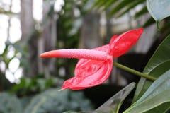 Oavkortad blom Arkivfoton