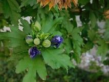 Oavkortad blom Fotografering för Bildbyråer