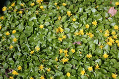 Oavkortad blom för blommor i vår Arkivfoton
