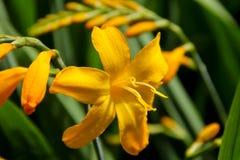 Oavkortad blom för härlig gul blomma arkivfoto