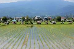 Oavkortad blommande landsbygd för vanlig hortensia royaltyfri foto