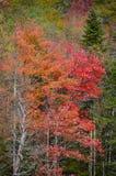 Oavkortad färg för höstädelträn i Adirondack berg Royaltyfri Foto