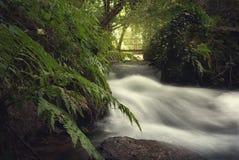Oavkortat flöda för flod Arkivfoton