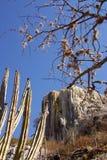 oaxaca Zdjęcie Royalty Free