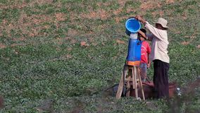 A Farmer Pour Water In The Pesticide Backpack. OAXACA, MEX 2016 ILLUST. IMAGE. A farmer pour water in the pesticide backpack. Nowadays Mexico import many food stock footage