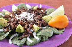 Oaxacan蚂蚱沙拉 库存照片