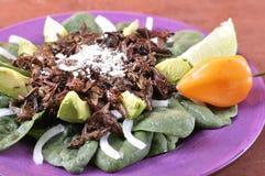 Oaxacan grasshopper salad Stock Photo
