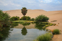 Oaza Huacachina, Ica region, Peru Zdjęcia Stock