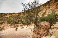 Oaza na drodze Immouzer blisko Agadir Maroko Zdjęcia Stock