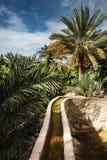 Oaza po środku pustyni Obrazy Royalty Free