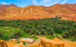 Oaza w Maroko, pobliscy wąwozy Todra fotografia royalty free