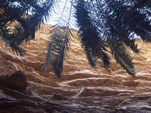 Oaza w Mauretania Zdjęcia Stock