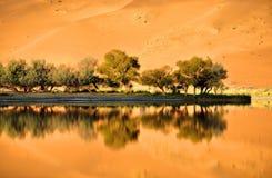 Oaza w pustyni Zdjęcia Royalty Free
