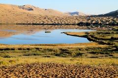 Oaza w pustyni Obrazy Royalty Free