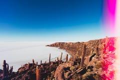 Oaza w soli pustyni Zdjęcia Stock
