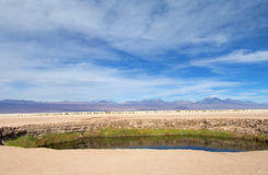 Oaza w Valle de losie angeles Luna, księżyc dolina w San Pedro de Atacama pustyni Zdjęcia Royalty Free