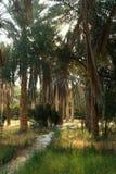 oazy daktylowa palma Obraz Royalty Free