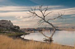 oazy jałowy pustynny drzewo Obrazy Stock